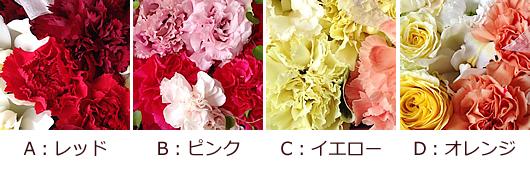 カラーパターン.jpg
